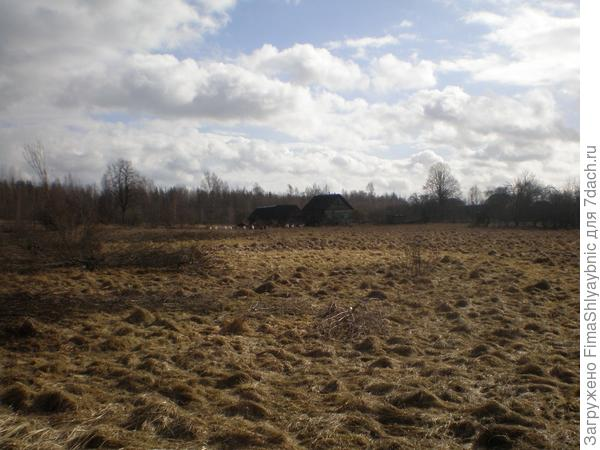 Козы в Вярьмово (белые и черные точки возле дома)