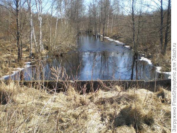 Мост у заброшенной деревни далеко в лесу