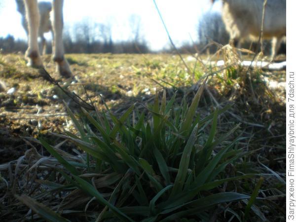 Зеленый кустик травы