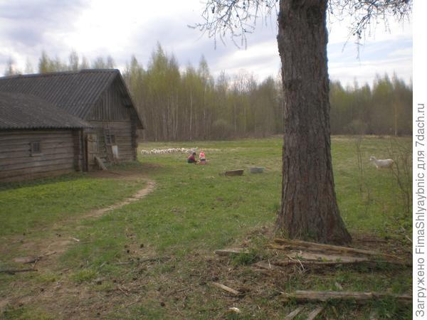 Дети и козлята в деревне Вярьмово. 2017 год. Справа - коза-подросток Колбаса