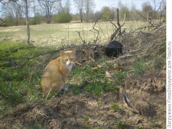 Кошка Багира (черная) с подругой
