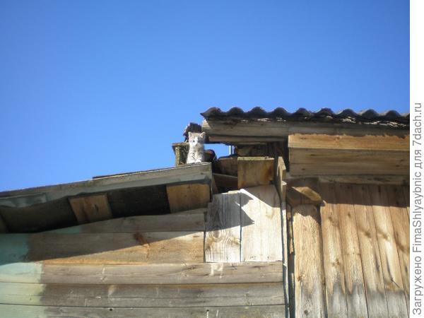 Неликвид на крыше после поедания очень ликвидного творога