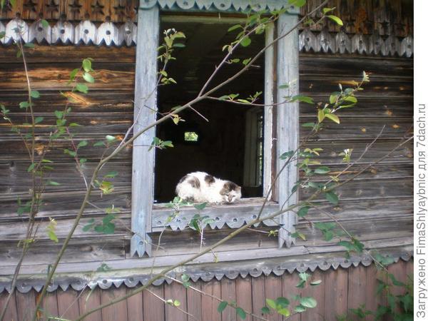 Кот и старый дом в деревне