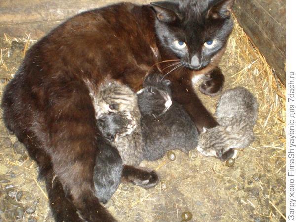 Багира и котята в хлеву