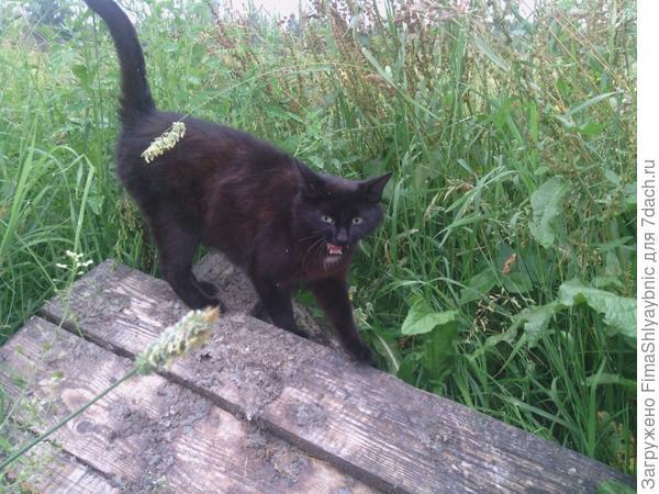 Кошка Багира любит солнце
