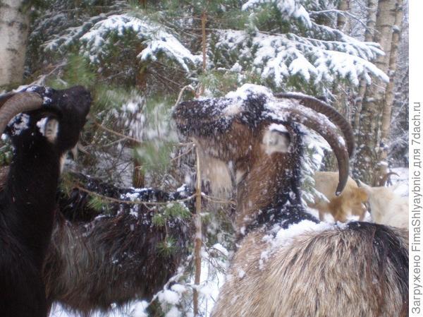 Мишель стряхивает снег с ветки на Бендеру
