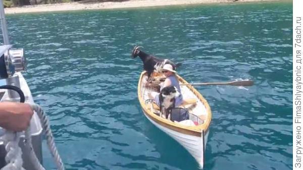 Морские волки плывут за почтой. Фото с сайта stuff.co.nz