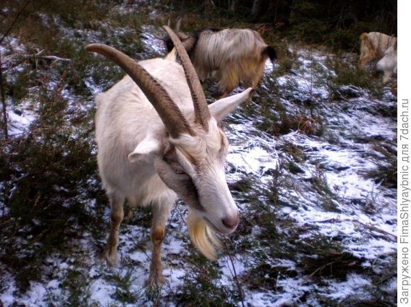Прогулка козы длиною в световой день