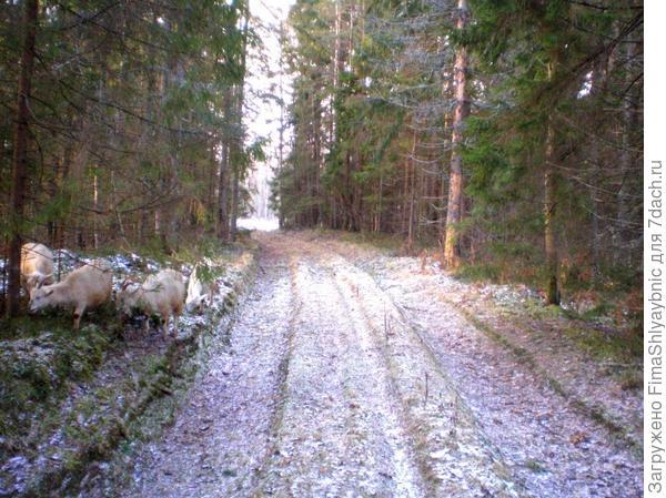 Лесная дорога на Далекую Солнечную поляну