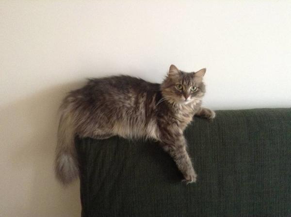Кошка потерявшаяся. Фото с сайта poteryashka.spb.ru
