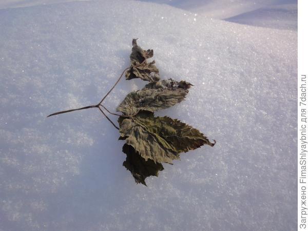 Лист и снег