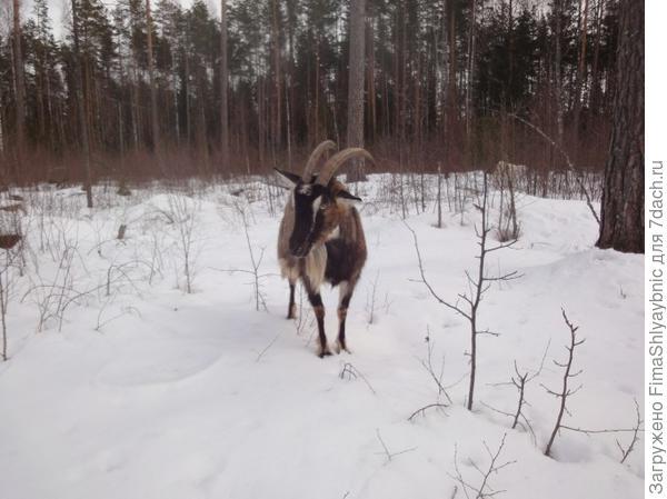 Бендера в лесу