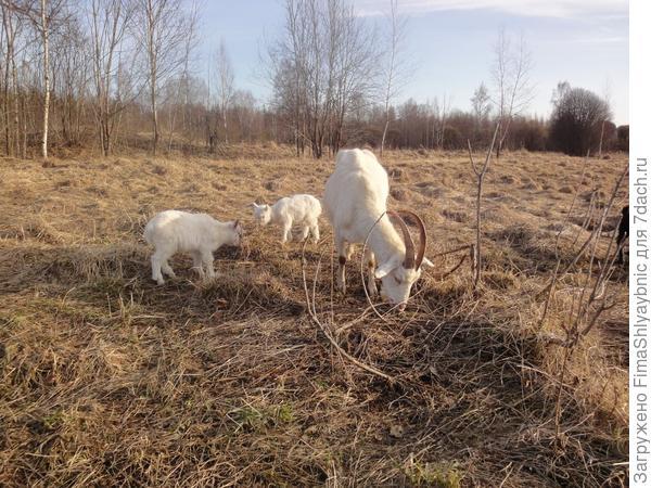 Маруся с козлятами
