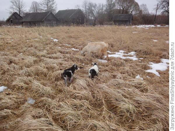 Белка и Белкины козлята