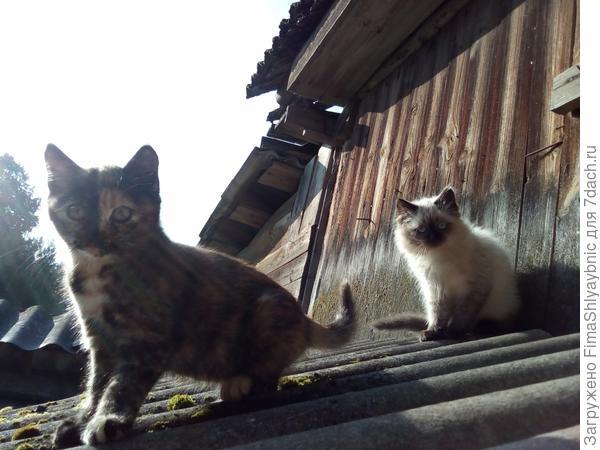 Оставшиеся котята утром