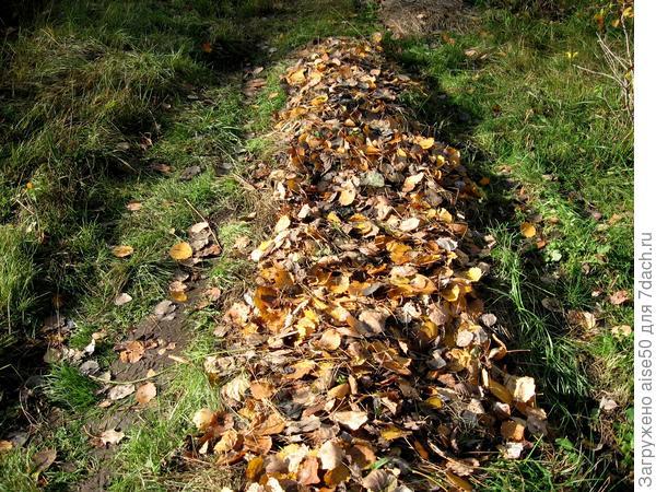 сбор листьев