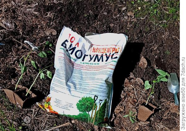 Фасоль овощная Далматинец агрофирмы Аэлита.Эксперимент продолжается
