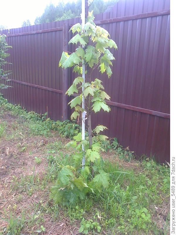листики и веточки начинаются почти от земли