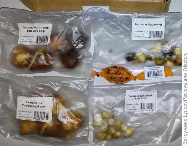 ПРИЗовой набор луковичных