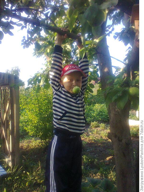 Яблони, это хорошие тренажёры для тарзанят)))) На заднем плане домик для детей (в тенёчке яблони) с канатом для качелей))) Раньше этот канат висел на толстой ветке яблони (тарзанка).