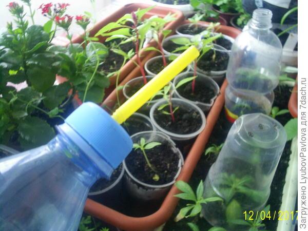 Бутылка удобна, но не долговечна) Ещё недостаток - надо сделать отверстие в пробке точно по размеру трубочки, тогда не будет пропускать воду помимо неё.