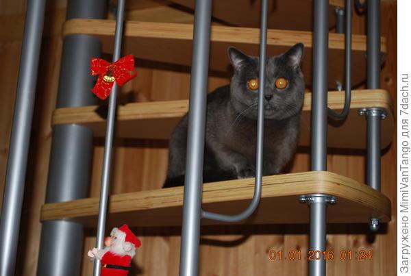 Коту на даче сразу понравилось и мне тоже.