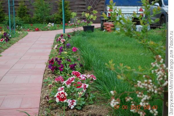 Кромка газона вдоль цветов.