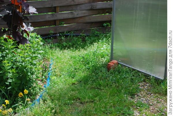 У входа в теплицу тоже трава.