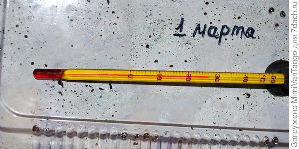 Температура для прорастания в пределах 24-26С.