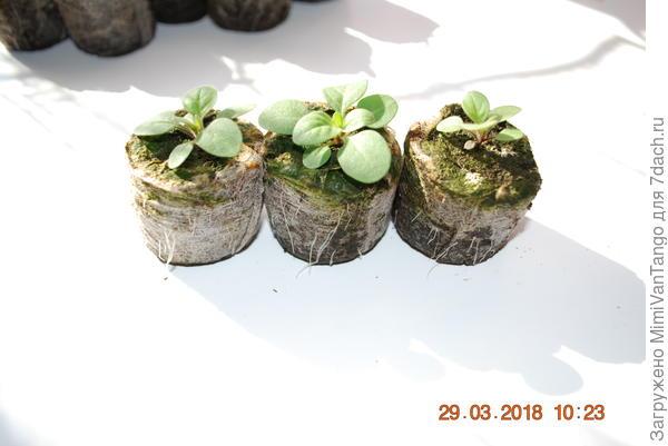 На этом фото хорошо видно что корни растений уже прошли сквозь защитную сеточку.