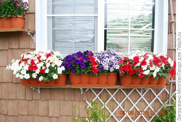 Трудно фотографировать отдельно белые,так как посажены вместе разные цвета.