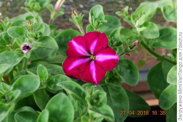 Первый цветок.