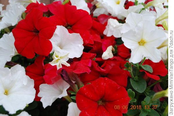 Красное и белое.