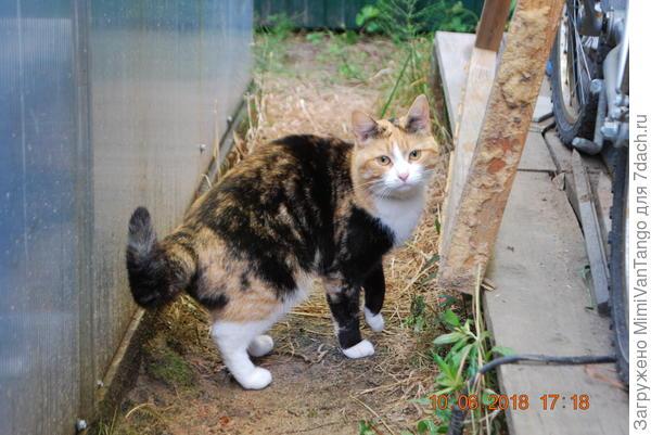 На запах пришла кошка соседки,Мурка...тоже перекусила.