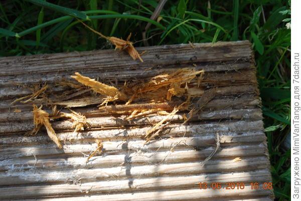 Это только на первый взгляд древесина цела,но стоило мне немного ковырнуть гвоздём и ... уже труха.Нет разницы и это всего два года обрезок пролежал на земле.