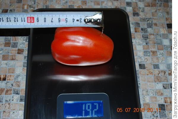 Самый крупный плод!