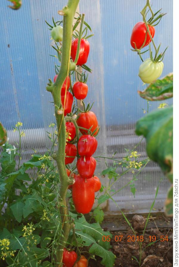 Урожай с куста №1