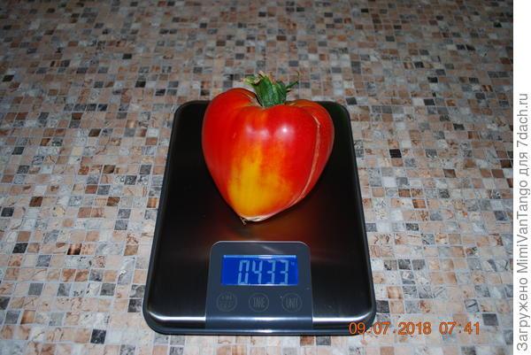 вес самого крупного плода всего 433г.