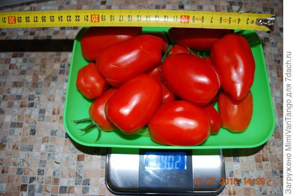 Размер.Всего 21 плод.