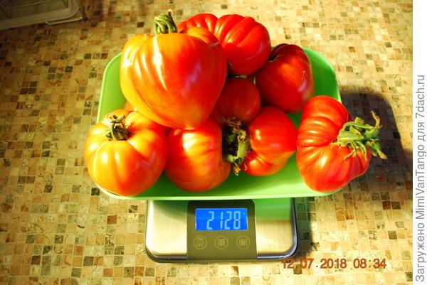 Всего семь плодов,средний вес плода немного более 300 грамм.