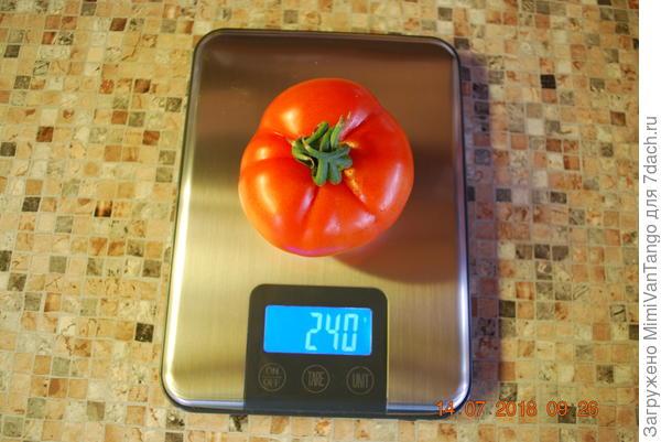Для понимания размера вес одного плода.