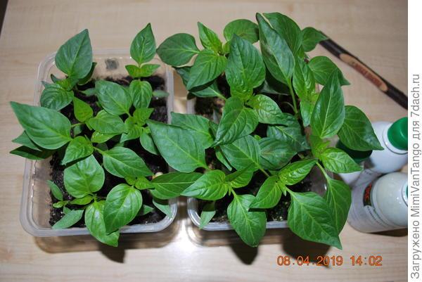 Растения сегодня