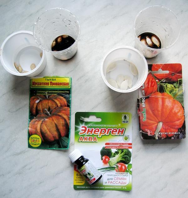 Обработка семян тыквы в препарате Энерген АКВА