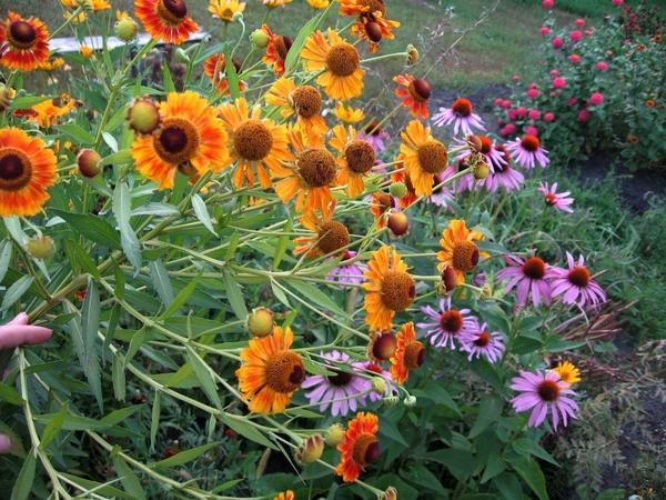 Яркие краски августа
