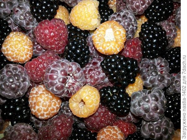 ягоды малины и ежевики
