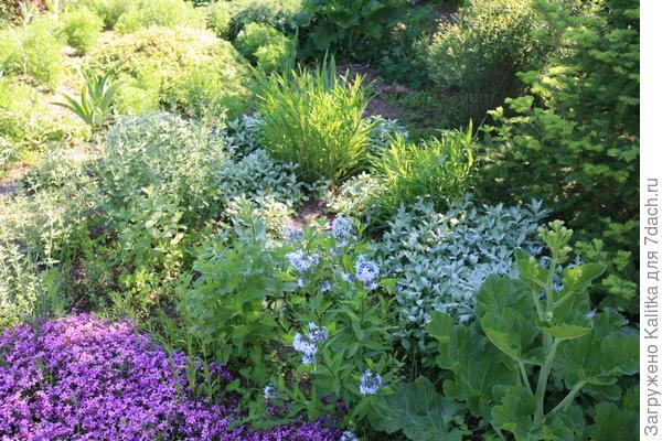 Вокруг самого катрана можно посадить мелколуковичные: пролески и крокусы.