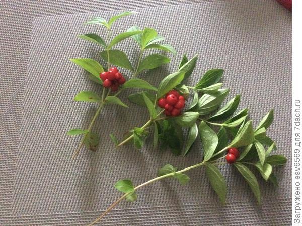 Что это за ягода?