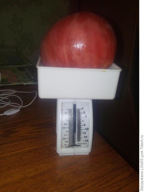 """помидор """"малиновый богатырь"""""""