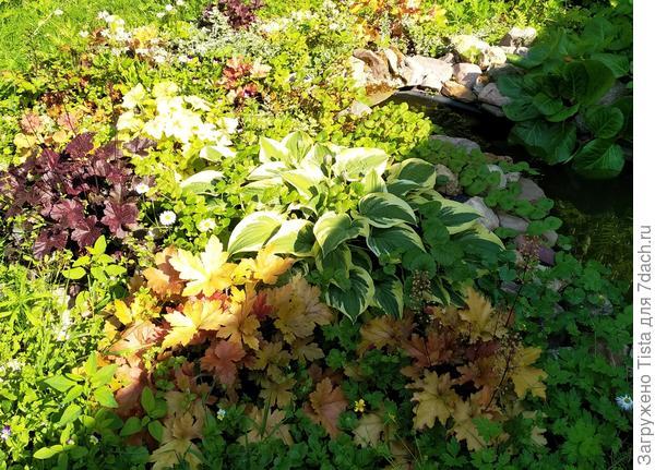 Как избавиться от ос без вреда для растений?