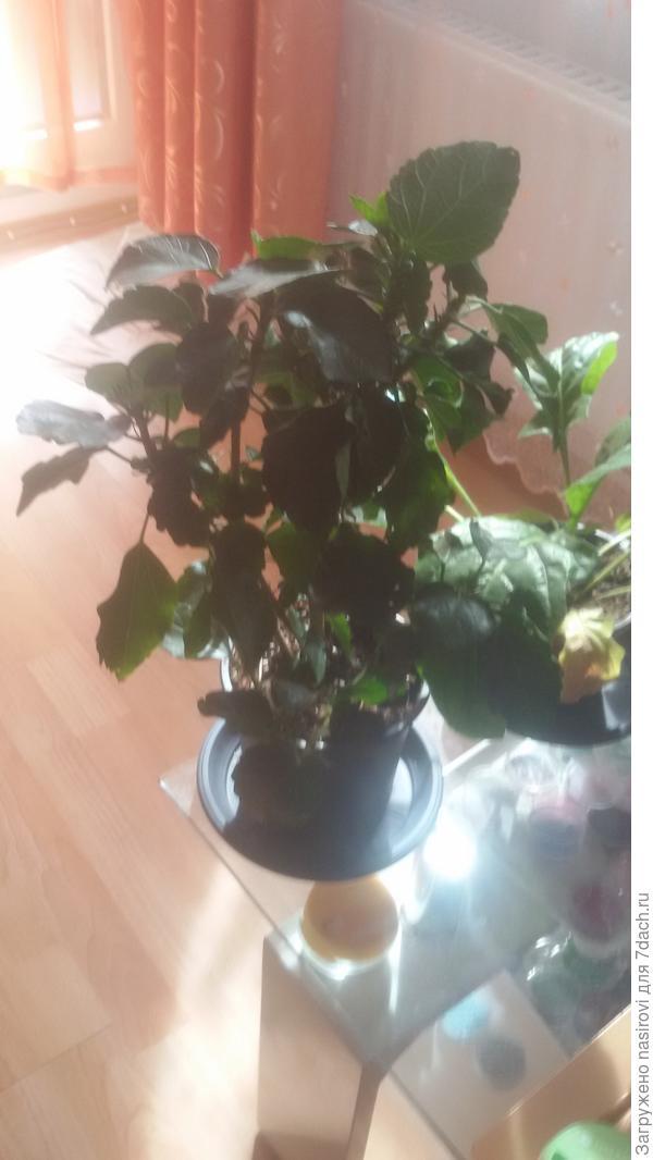 Помогите пожалуйста узнать сто ето за растение